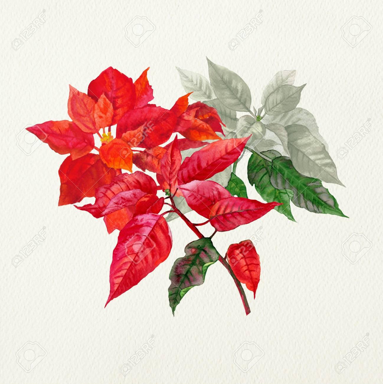 christmas poinsettia watercolor christmas illustration stock photo