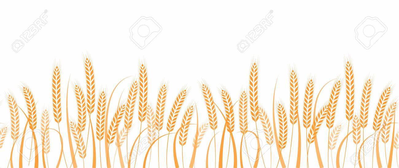 Ears of wheat in field horizontal border seamless pattern - 152908331