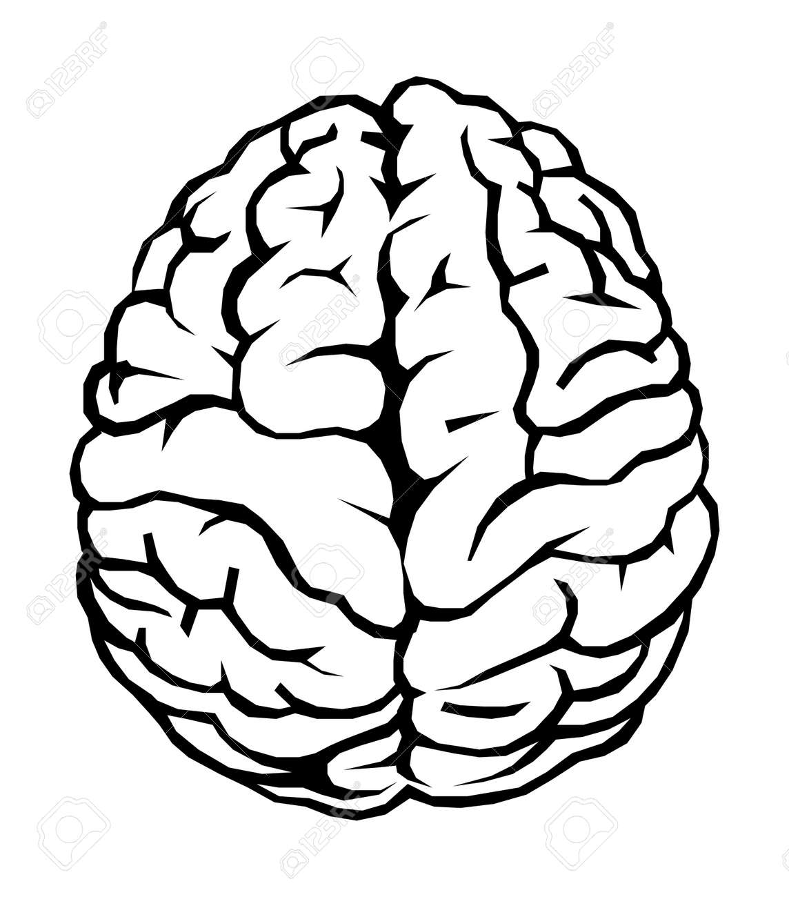 Human brain Stock Photo - 494890