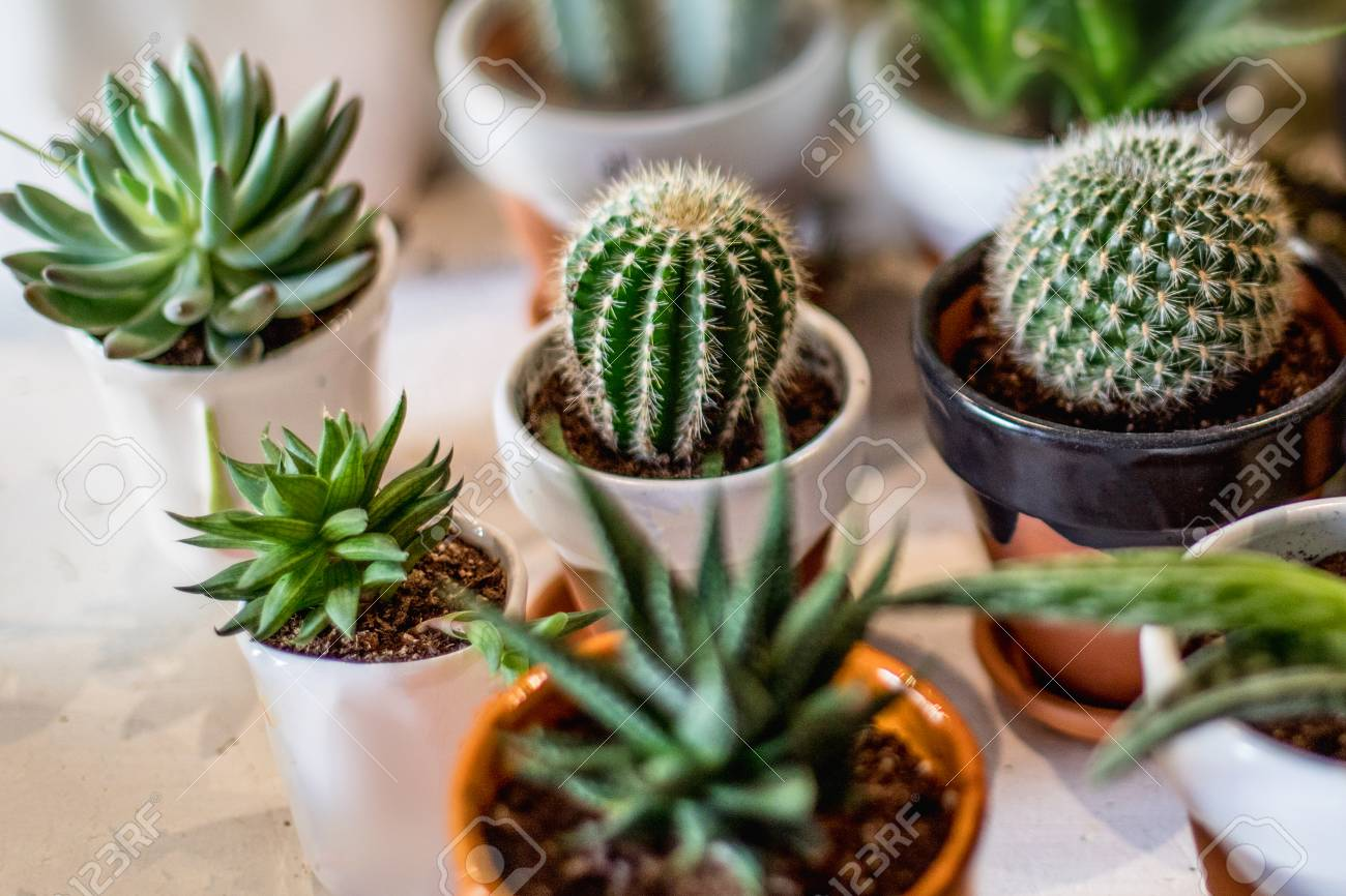House Indoor Plants Collection Succulent And Cactus In Different Stock Photo Picture And Royalty Free Image Image 110032659