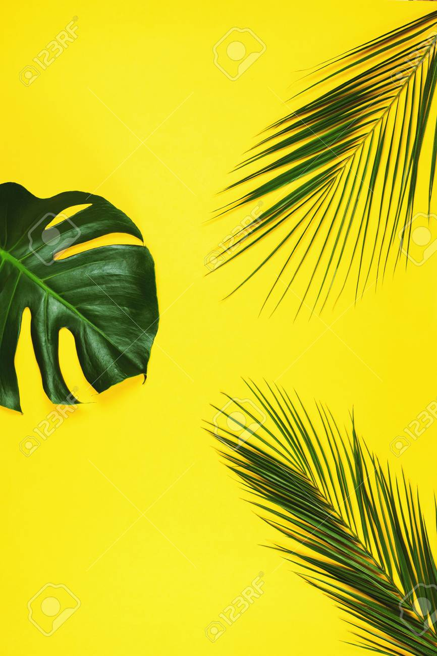 Palm Leaves And Philodendron Monstera Leaf On Yellow Tropical Stock Photo Picture And Royalty Free Image Image 90791477 1000 x 1080 jpeg 384 кб. palm leaves and philodendron monstera leaf on yellow tropical