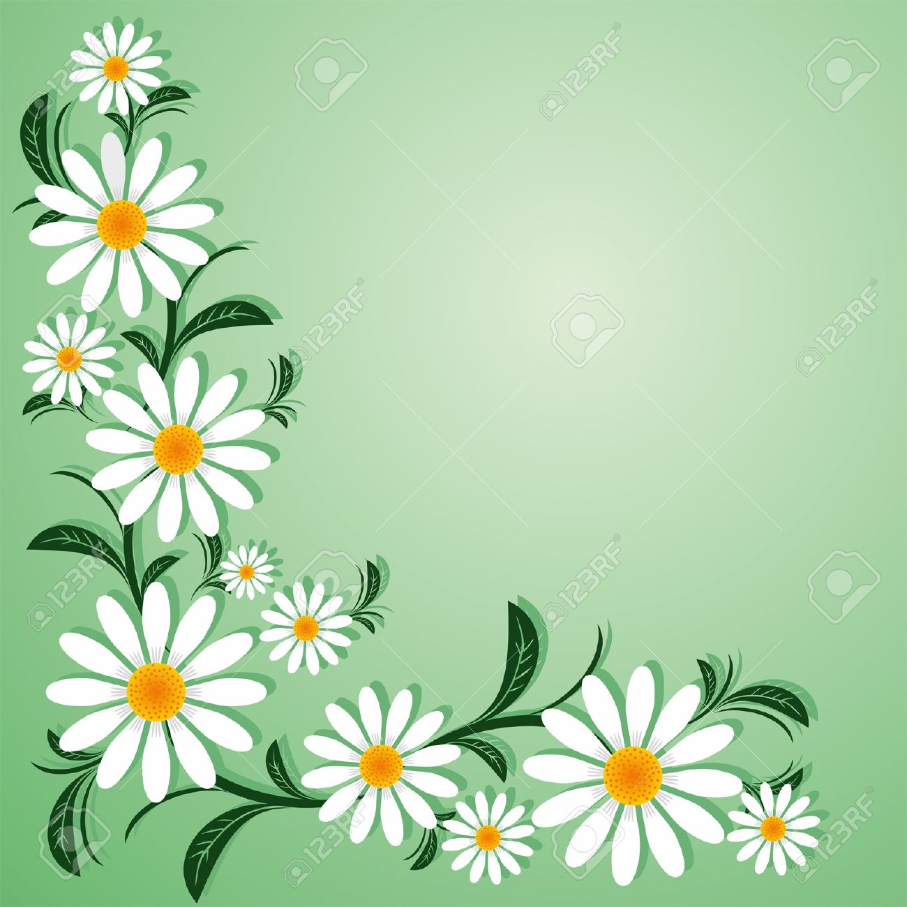 Floral border with with Chamomiles. - 18384826