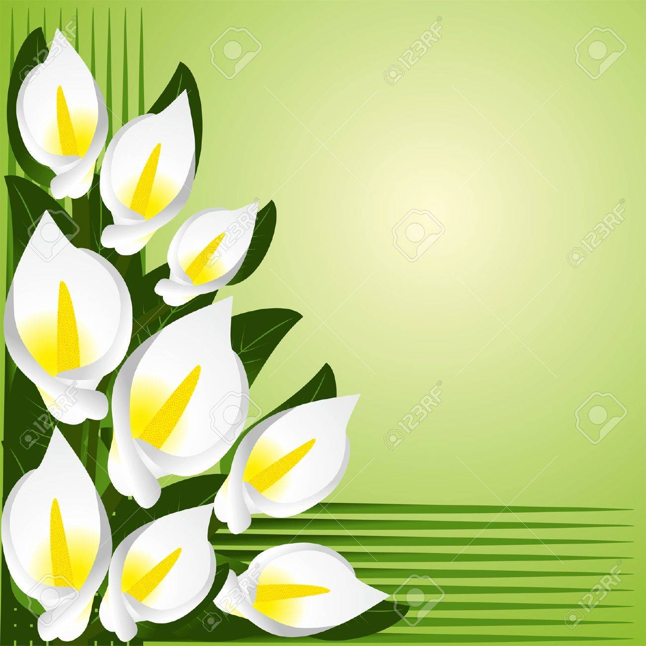 Calla lily stock photos royalty free calla lily images flower border with calla lilies illustration izmirmasajfo