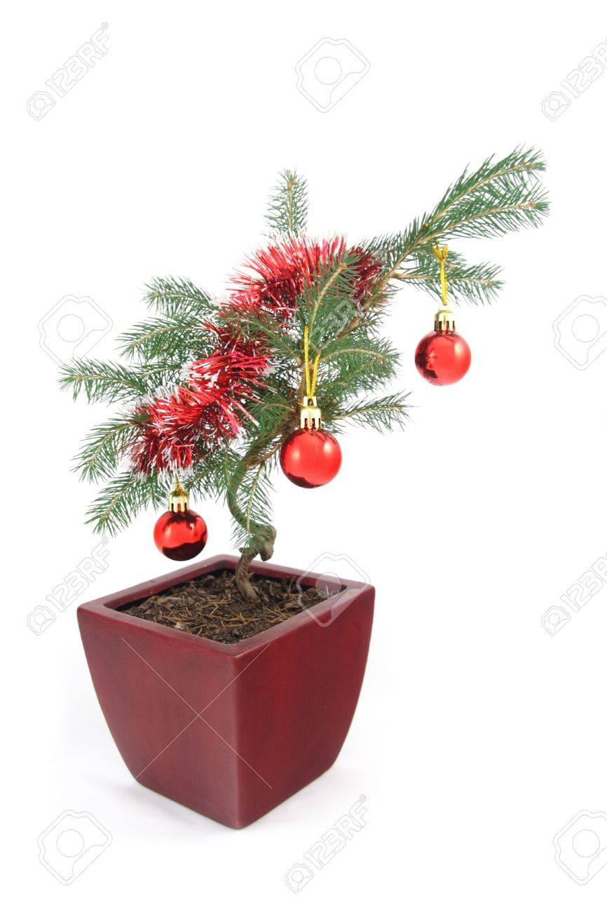 Unusual Bonsai Christmas Tree Decorated With Baubles And Splatter Stock Photo Picture And Royalty Free Image Image 6181023