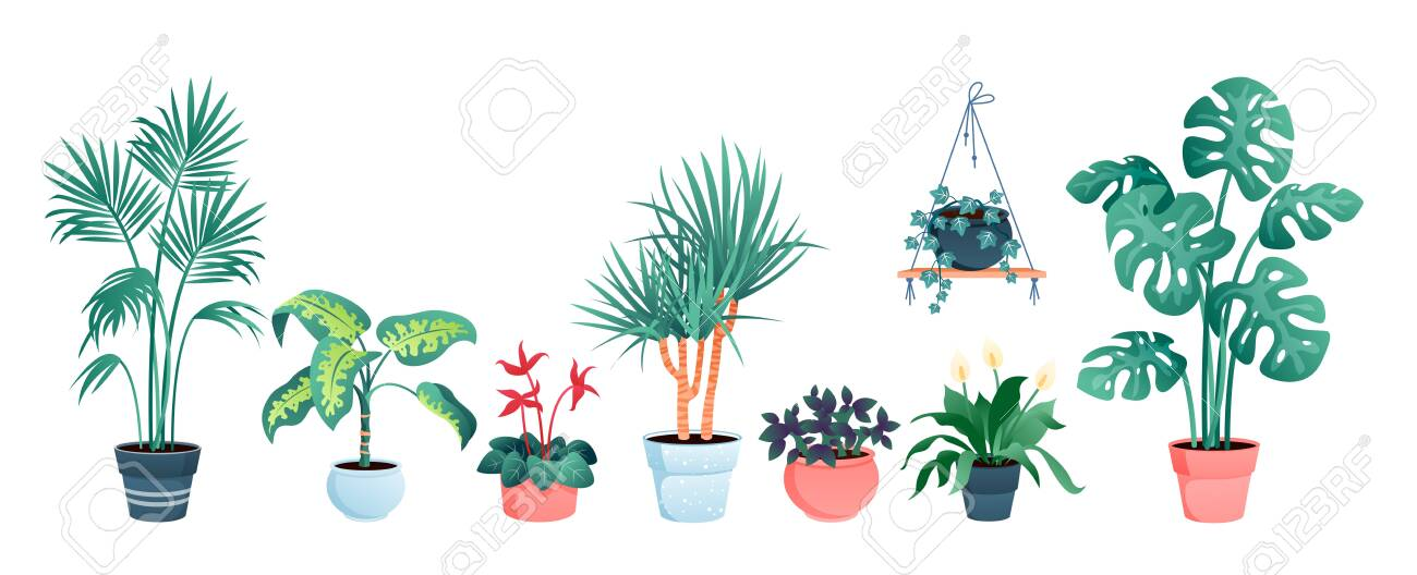 House plants home decor vector illustration set. Cartoon potted green plants flowers collection, houseplants in clay pot, hanging decorative flowerpots isolated on white - 151948126