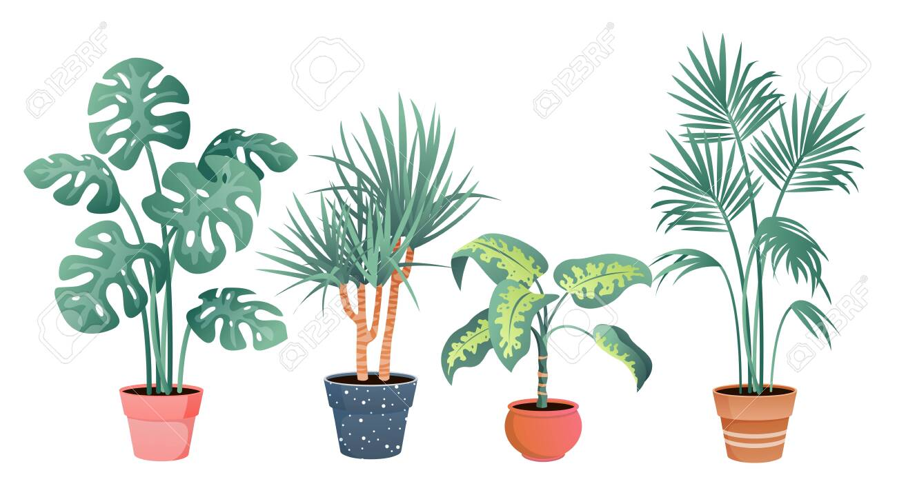 Tropical house plants decor vector illustration set. Cartoon flat potted plants from tropics botanical collection in clay pot for home garden decoration isolated on white - 152370281