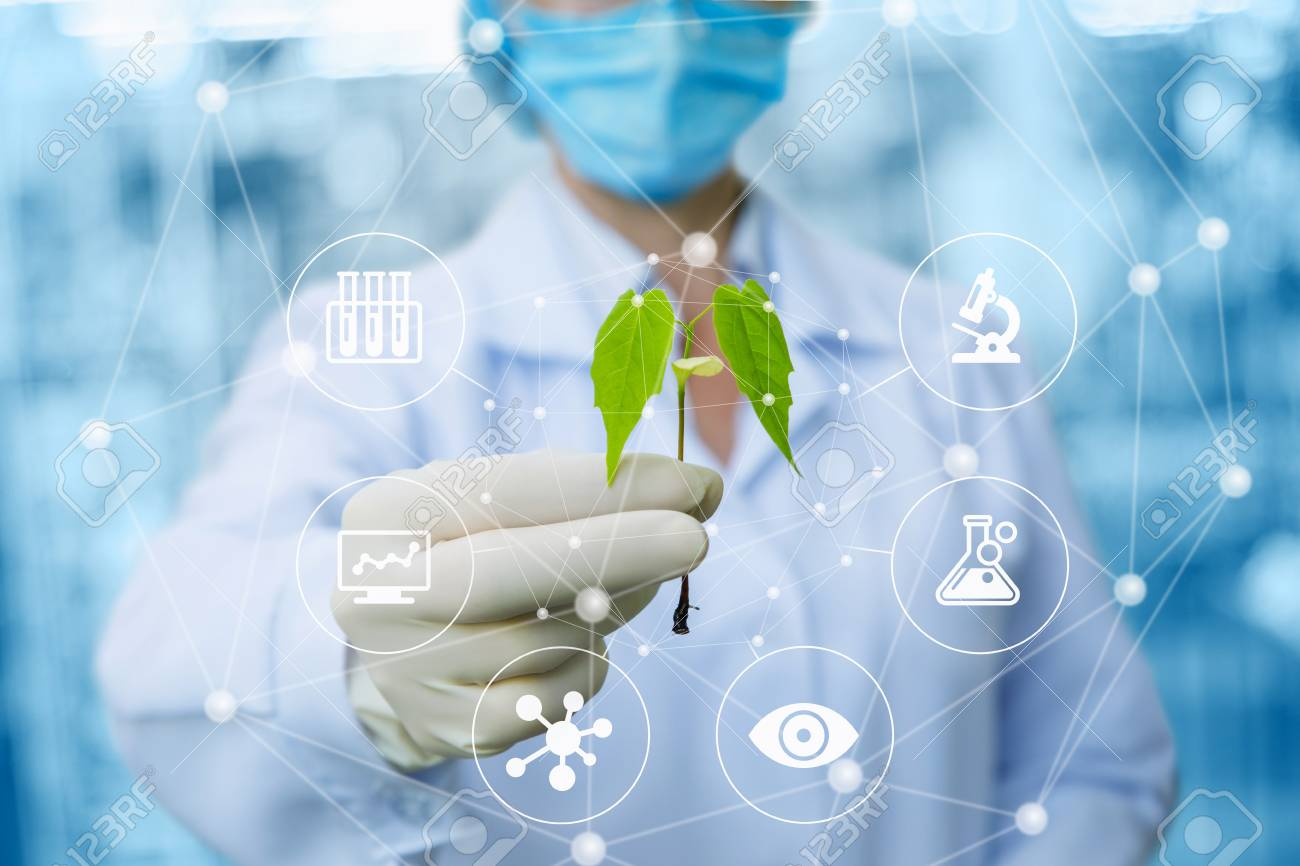 Sample of a plant in the hands of a biotechnologist on a blurred background. - 101421027