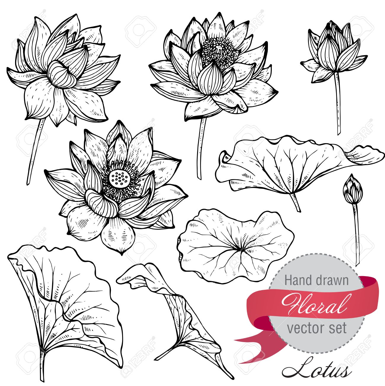 Vector Set Of Hand Drawn Lotus Flowers And Leaves Sketch Floral