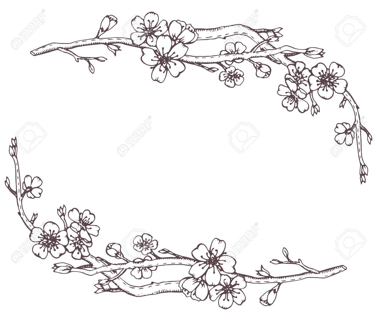 Vector frame with hand drawn graphic branches of a blossoming cherry tree (sakura) - 55733890
