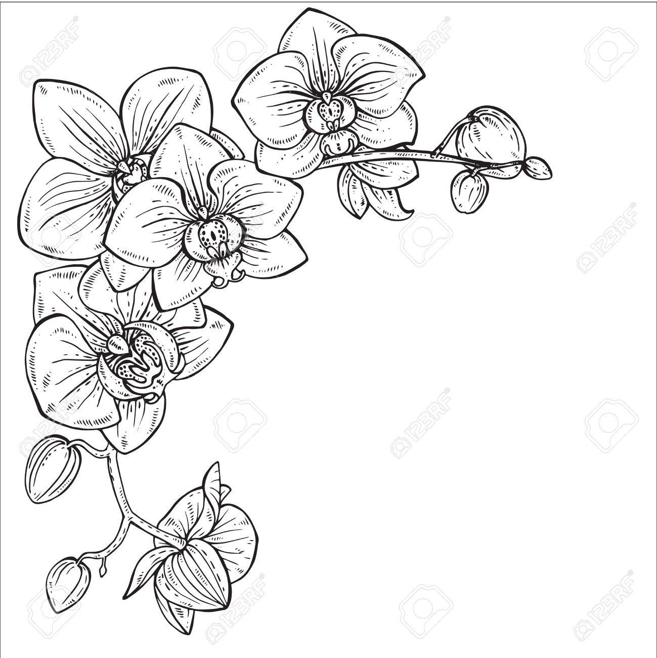 Belle Monochrome Floral Background Avec Des Branches D Orchidees
