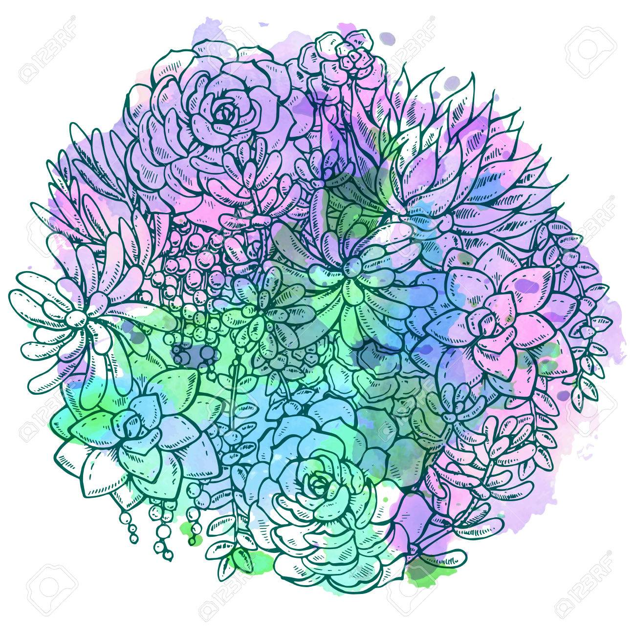Hand Drawn Succulent Bouquet On White Background With Watercolor Royalty Free Cliparts Vectors And Stock Illustration Image 58393321