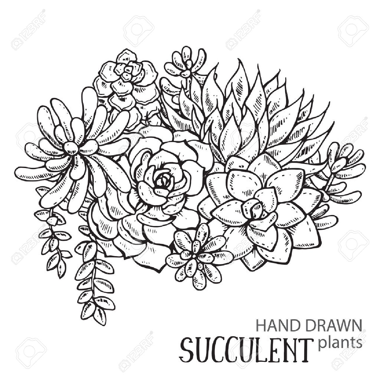 Vector Illustration Of Hand Drawn Succulent Plants Black And