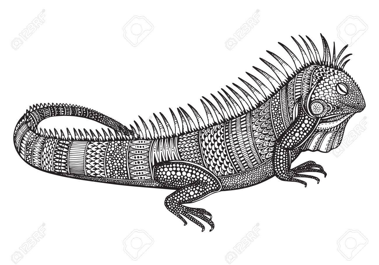 Dibujado A Mano Iguana Adornado Gráfico Con La Ilustración Del ...