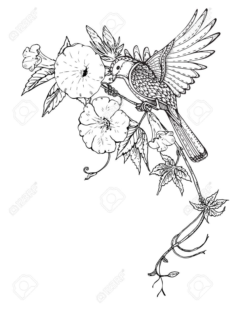 Vector Illustration De La Main Dessiné Oiseaux Graphique Sur Liseron Fleur Branche Image En Noir Et Blanc Pour Pour Livre De Coloriage Tatouage
