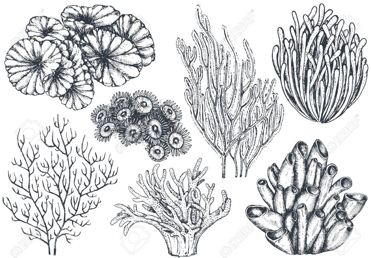 Vector Collection Of Hand Drawn Ocean Plants And Coral Reef Elements Royalty Free Cliparts Vectors And Stock Illustration Image 81843892