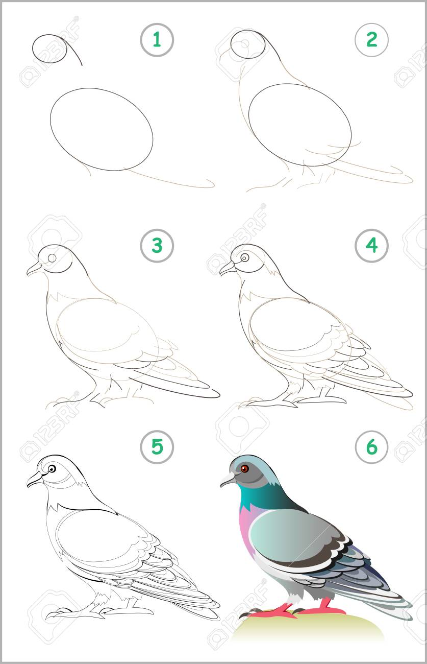 Page shows how to learn step by step to draw a cute pigeon developing children