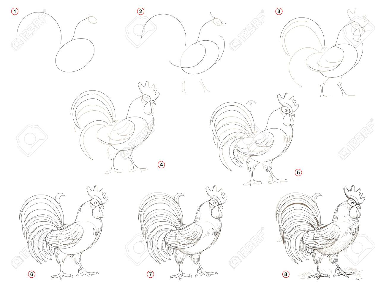 graphic regarding Rooster Printable titled Insightful web page for young children displays how toward acquire move through action..