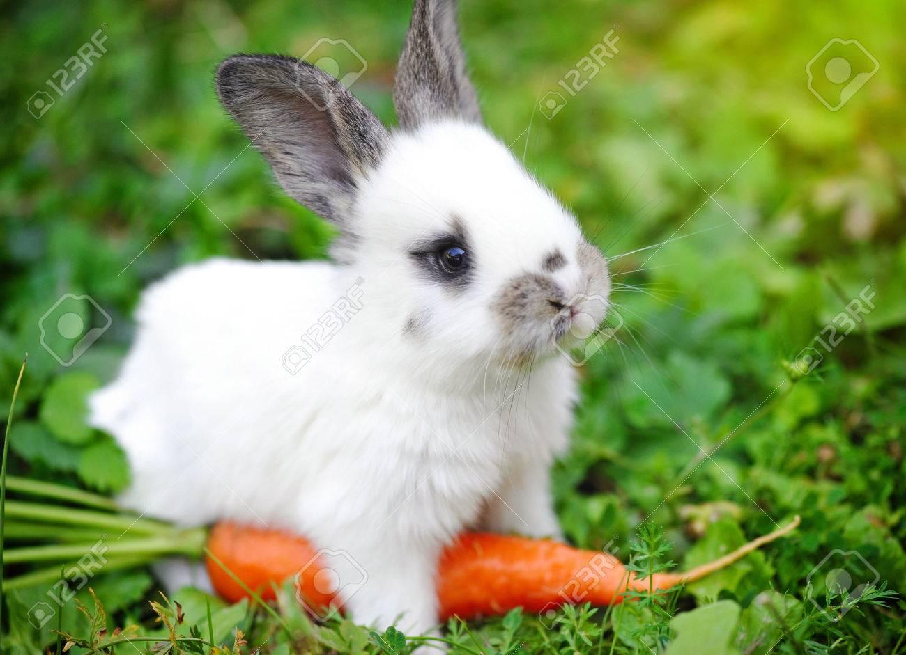 Excepcional Divertido Conejo De Color De Las Uñas Bosquejo - Ideas ...