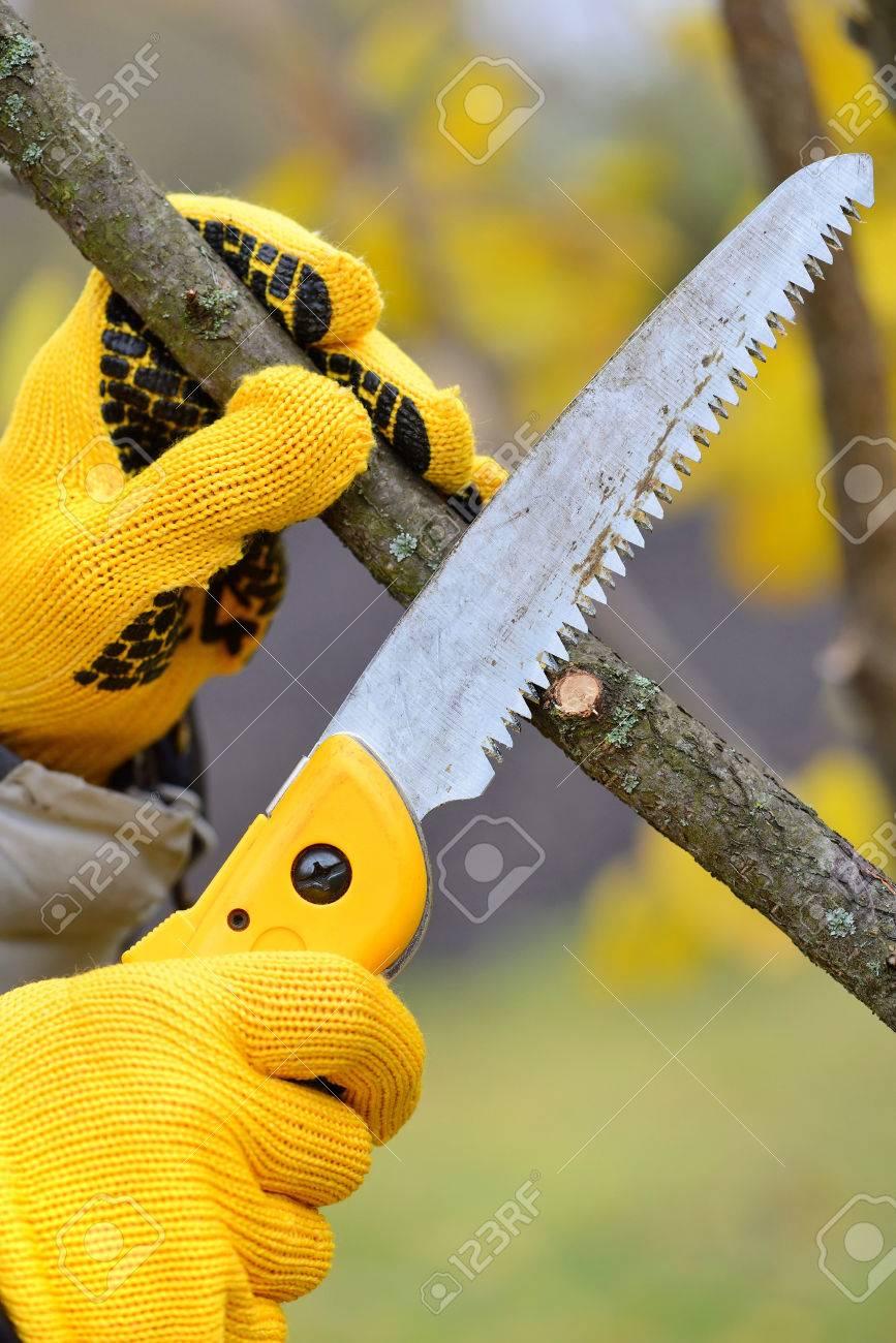 Hande Mit Handschuhen Von Gartner Tun Wartungsarbeiten Beschneiden