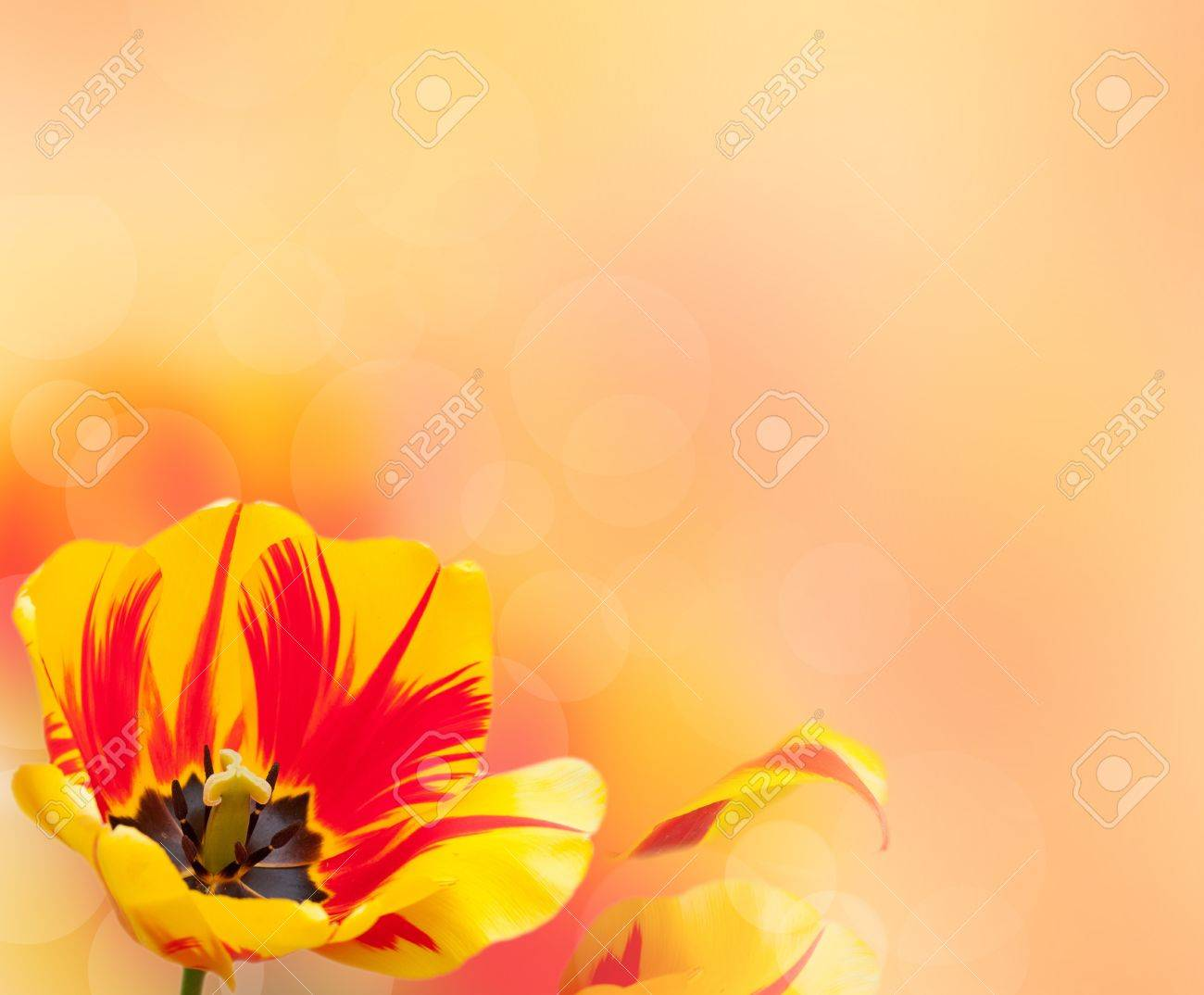 Beautiful tulip border over blurred background Stock Photo - 9979216