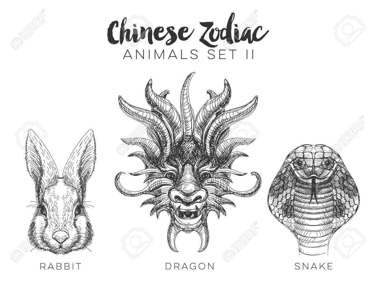 Vector set of hand drawn chinese zodiac animal vintage illustration vector vector set of hand drawn chinese zodiac animal vintage illustration with dragon rabbit and snake thecheapjerseys Gallery