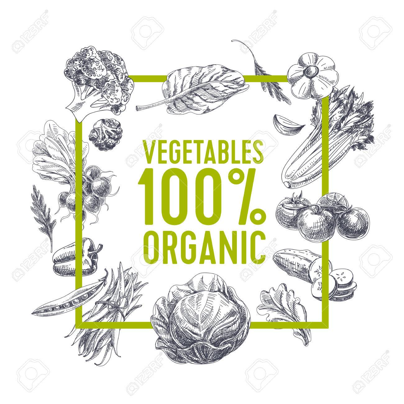 Vector hand drawn farm market Illustration. Vintage style. Retro organic food background. Locally grown sketch - 66667888
