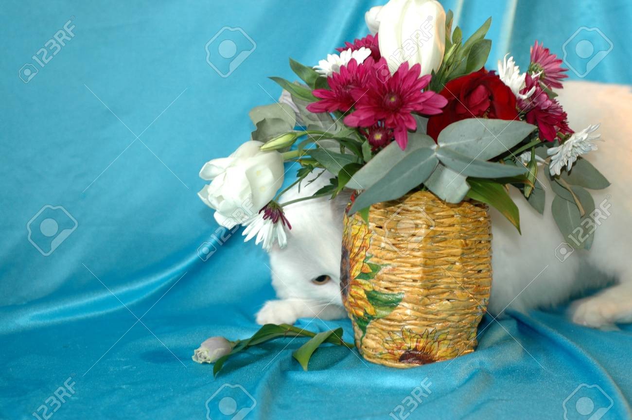 A beautiful fluffy white cat hides behind a vase of flowers stock a beautiful fluffy white cat hides behind a vase of flowers pets stock photo izmirmasajfo