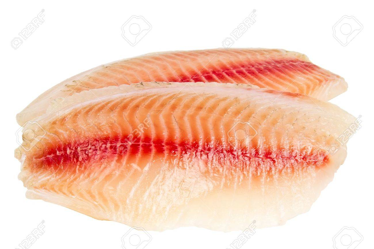 Tilapia Fillet Of Raw Fish Isolated On White Background Stock Photo Picture And Royalty Free Image Image 14158975