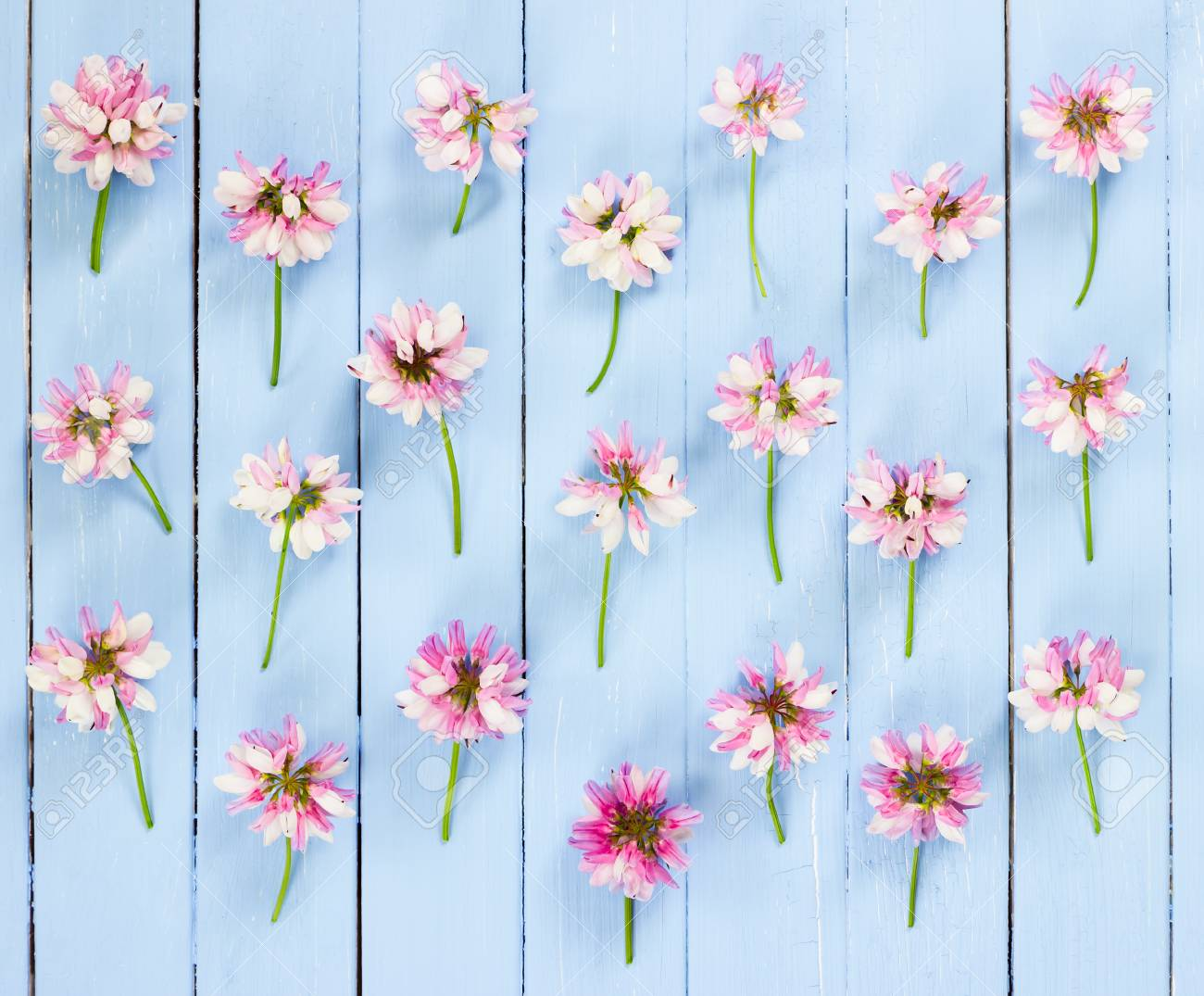 Meadow Pink Flowers On Blue Wooden Background Flat Lay Top Stock