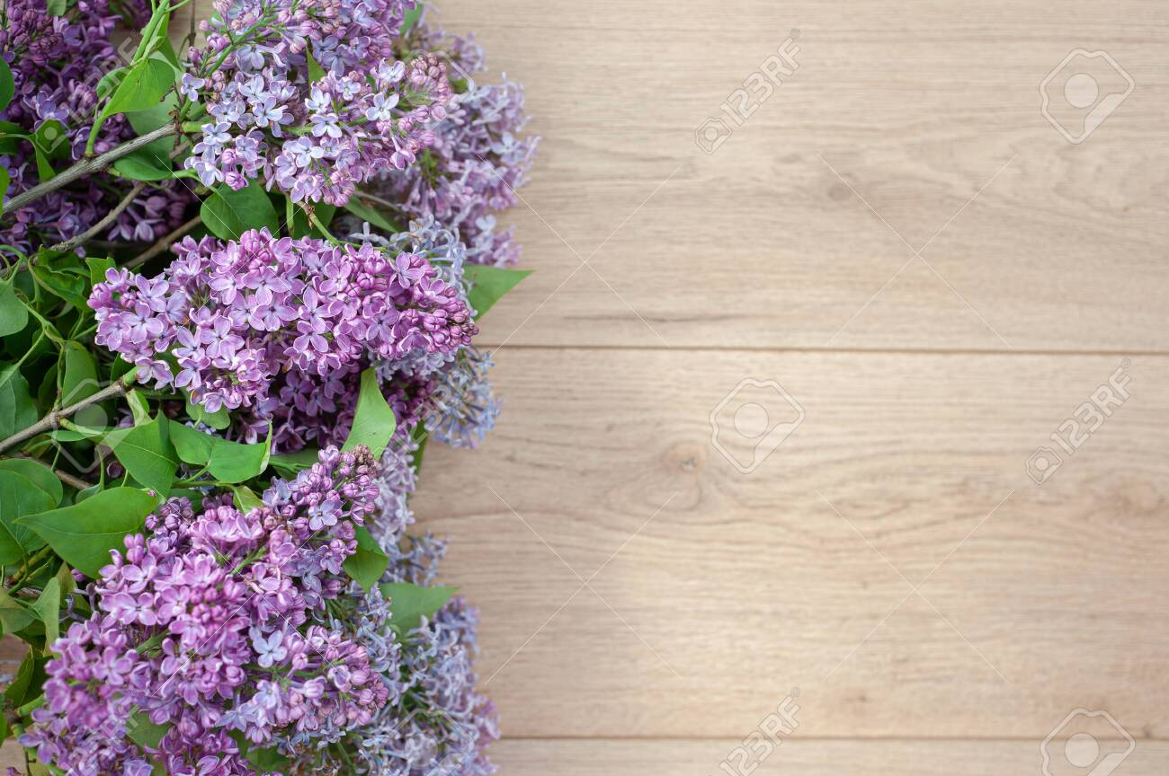 Lilac against the background of wooden boards in rustic style - 148831767