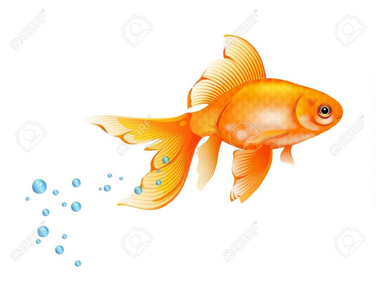 Orange Goldfish with bubbles of air Stock Vector - 13263152