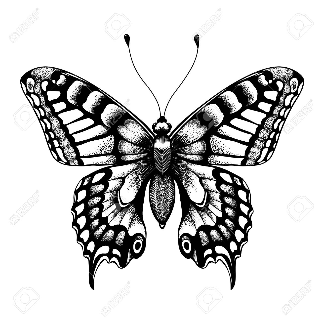 b8e96c3de Silhouette of butterfly. Tattoo butterfly. Isolated vector sketch of  butterfly. Stock Vector -