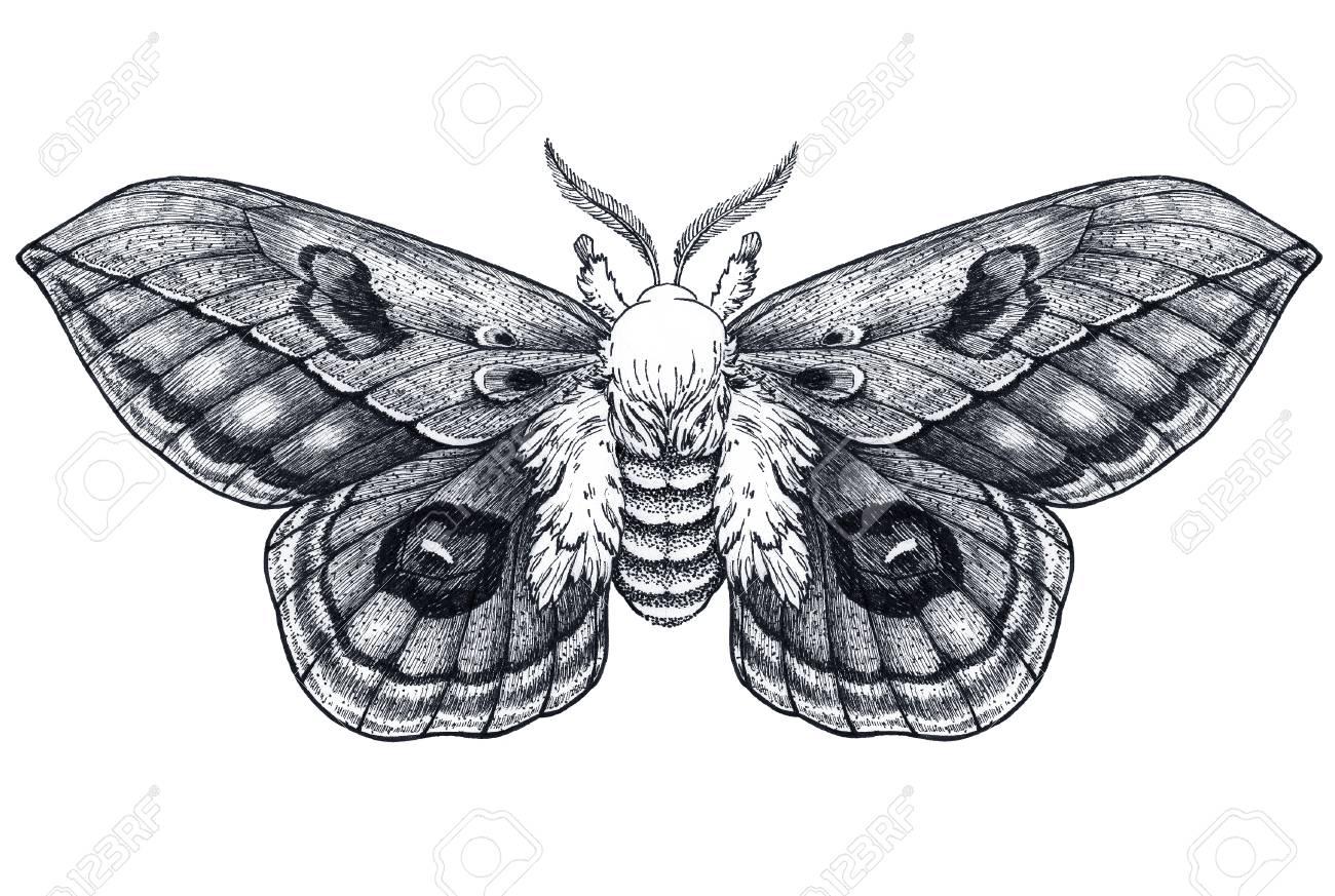 fa2b0d922 Hand drawn butterfly tattoo. Dotwork tattoo. Automeris Randa. Mystical  symbol of freedom,