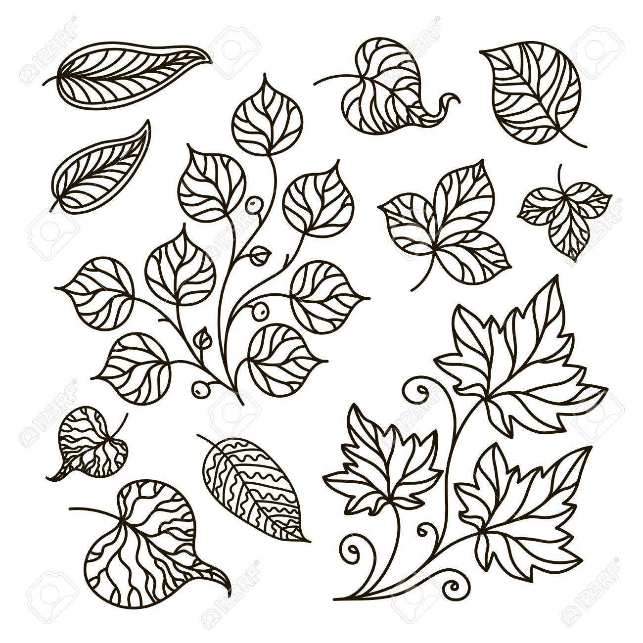 Ilustración De Contorno Libro Para Colorear Rama Conjunto Hojas
