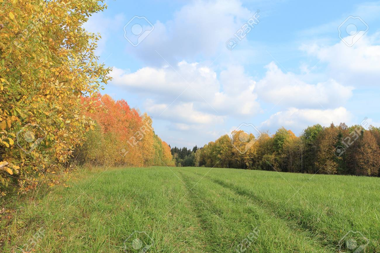 The Road To A Field Among Multi-colored Trees In The Autumn Sunny ...