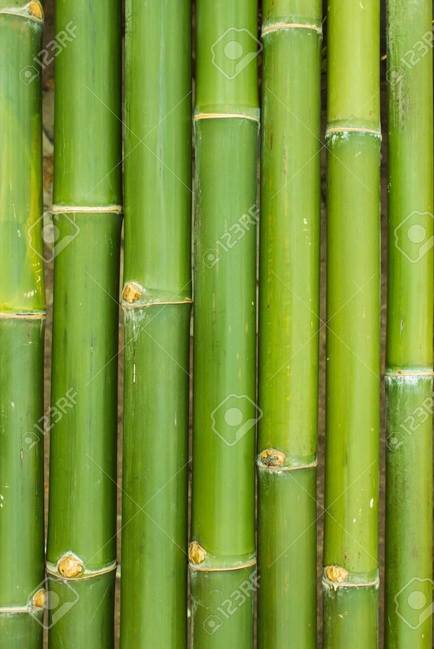 Palos De Bambu En Una Fila Como Fondo Fotos Retratos Imagenes Y - Palos-de-bambu