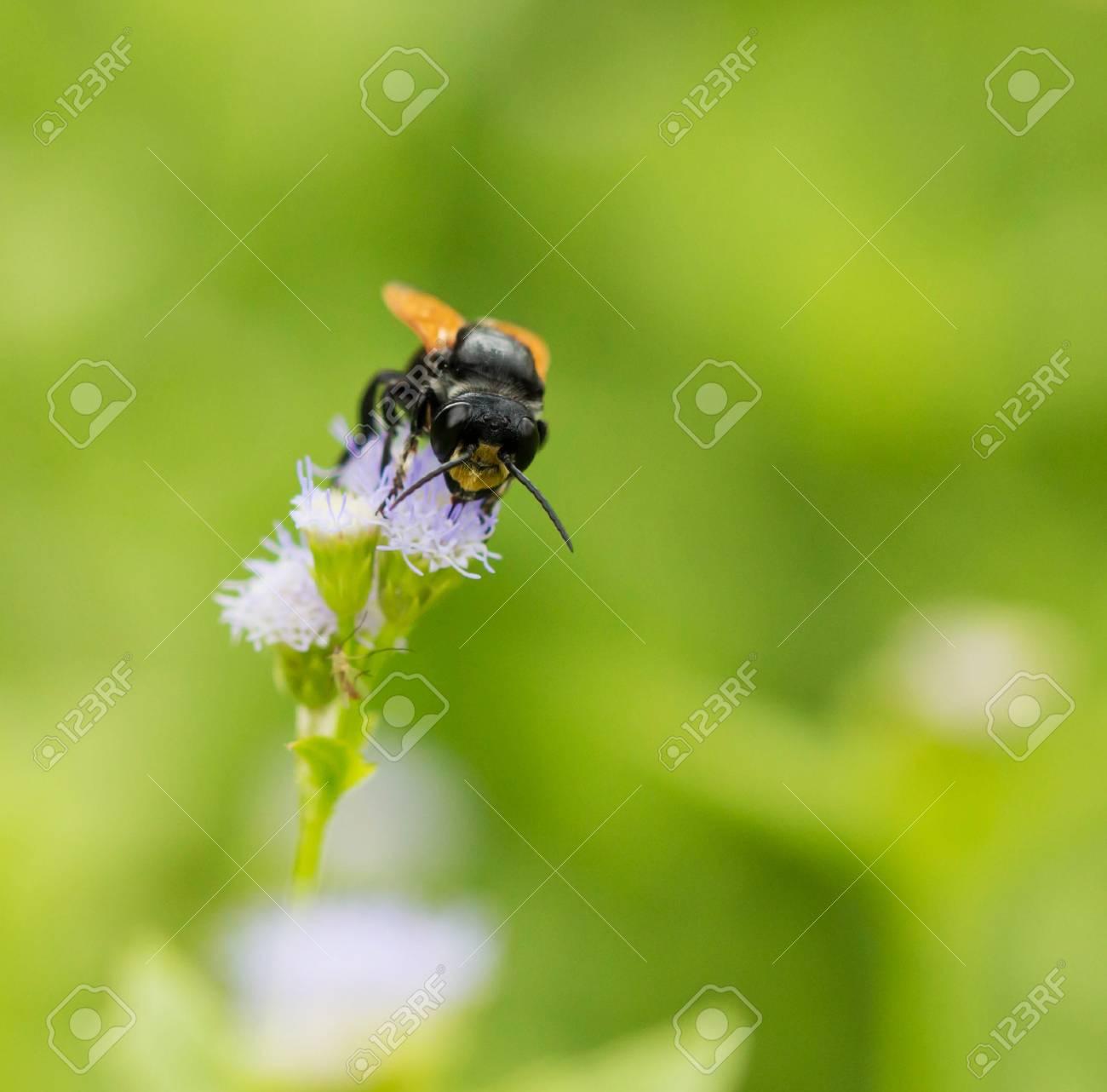 Schwarze Wespe Des Gartens Auf Einer Weißen Blume Lizenzfreie Fotos
