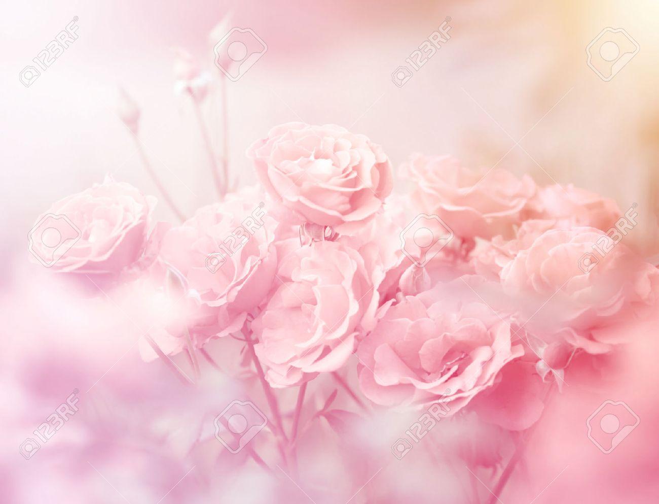 rosas rosadas en color suave hecho con estilo de la falta de
