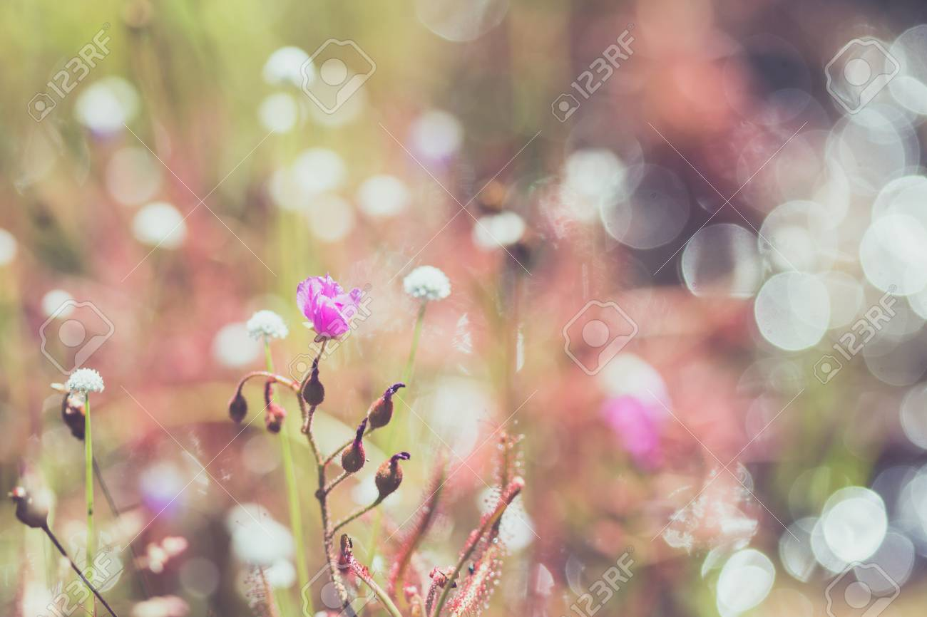 Spring summer small pink flowers and white flower in the field spring summer small pink flowers and white flower in the field stock photo 96643220 mightylinksfo