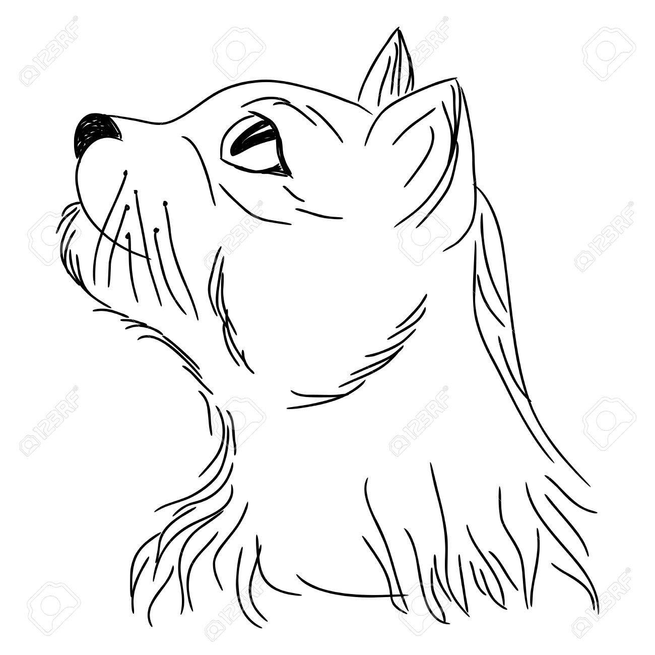 cat in profile looking up portrait sketching cartoon vector