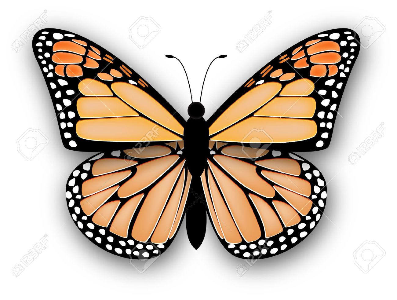 6 142 monarch butterfly stock vector illustration and royalty free rh 123rf com blue monarch butterfly clipart blue monarch butterfly clipart