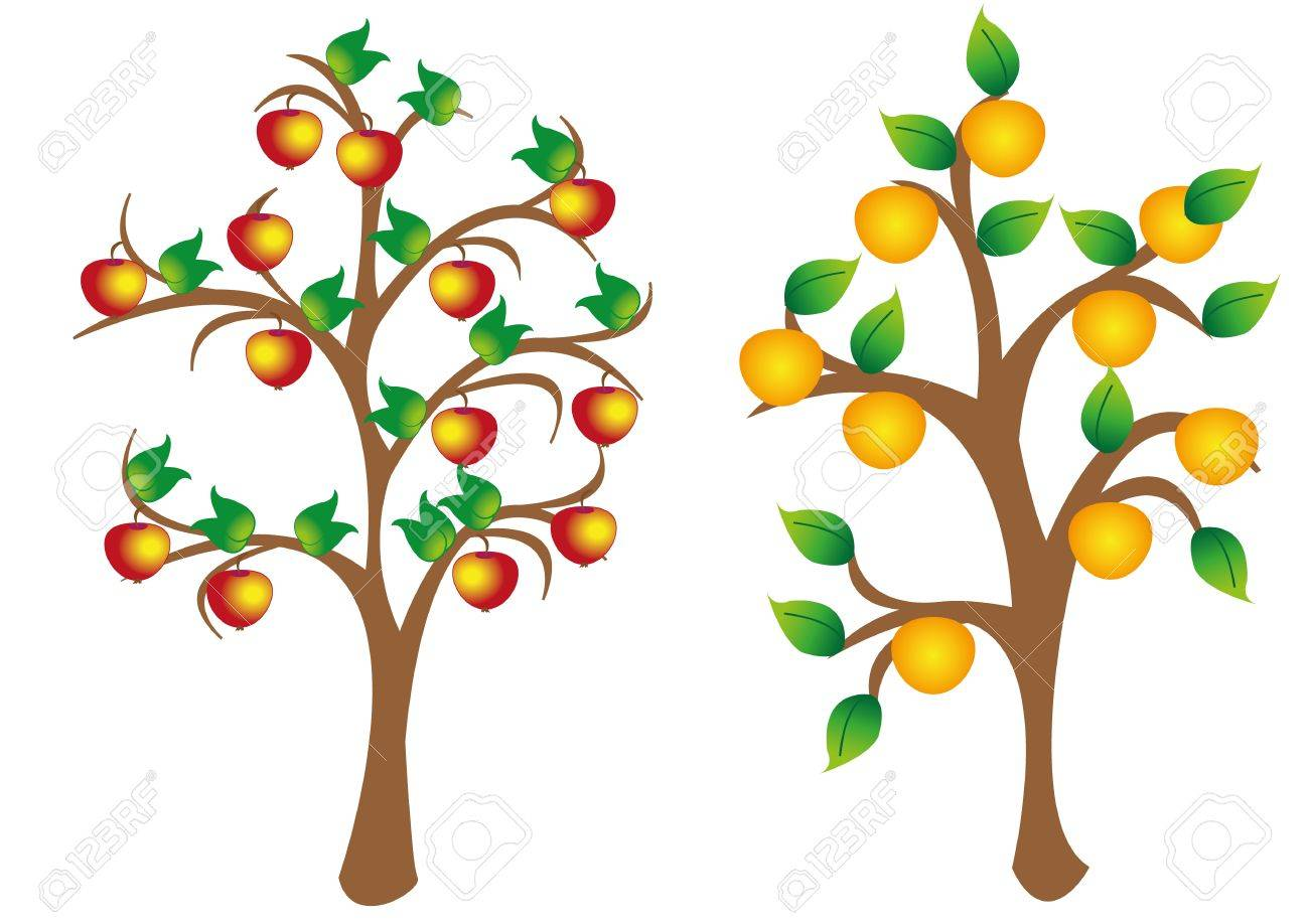 apple and an orange tree Orange Tree Vector