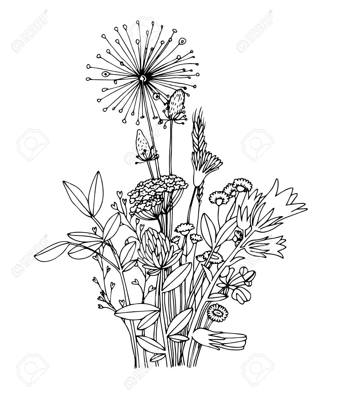 Sketch Of The Wildflowers On A White Background Hand Drawn Illustration Coloring Book