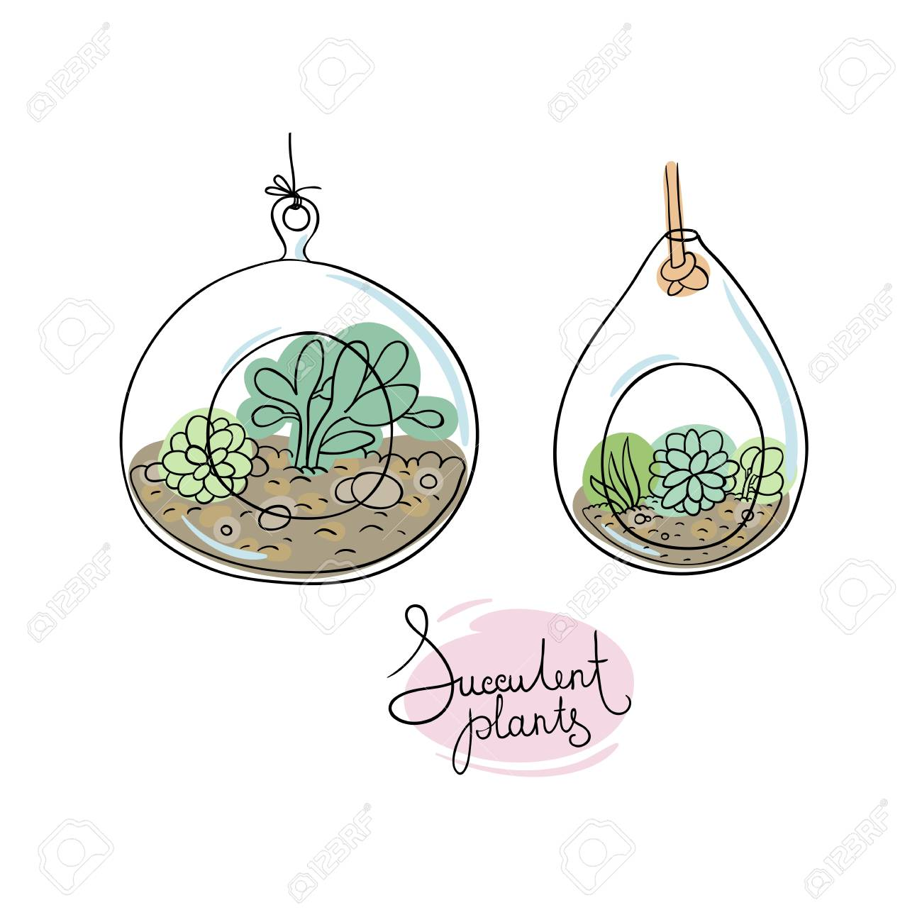 Vector Glass Terrariums With Succulents Set Hand Drawing Isolated Royalty Free Cliparts Vectors And Stock Illustration Image 63871915