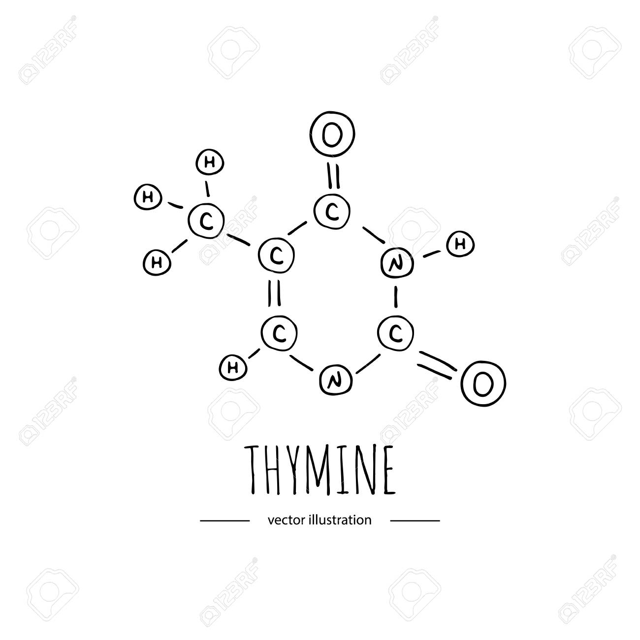 Hand Drawn Doodle Thymine Chemical Formula Icon Vector Illustration
