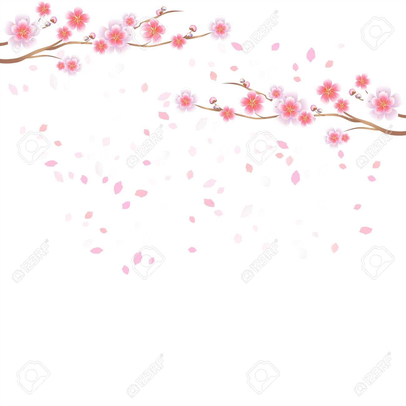 Banque d\u0027images , Branches de sakura avec des fleurs roses isolés sur fond  blanc. Fleurs de pommier. Fleur de cerisier avec des pétales qui tombent.