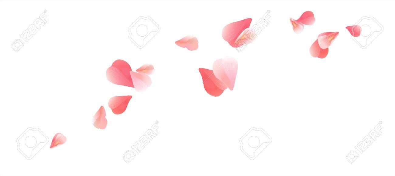 Diseño De Flores Pétalos De Flores Sakura Pétalos Volando Aislados