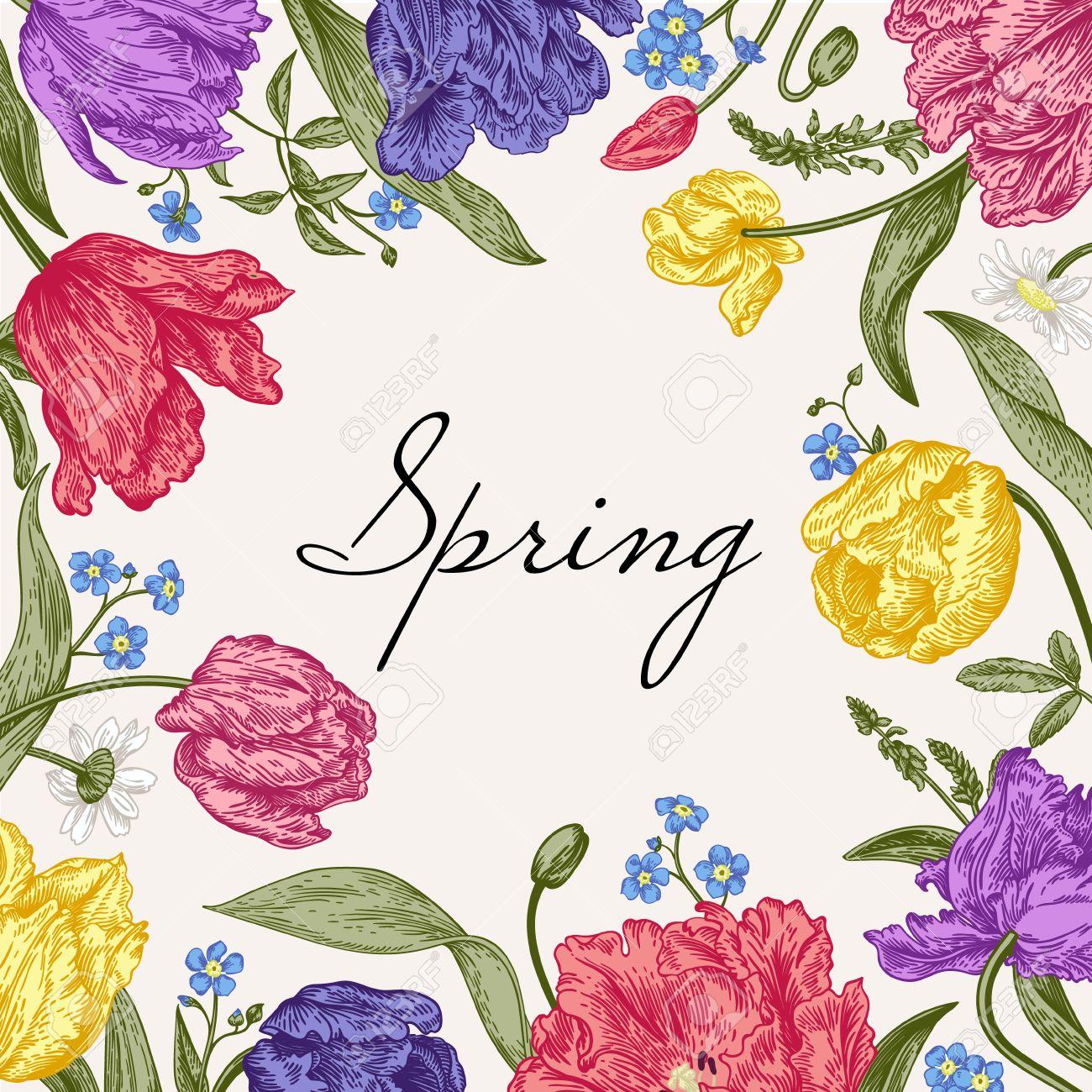 Vector Rahmen Mit Frühlingsblumen. Papageientulpen, Mich Nichtse ...
