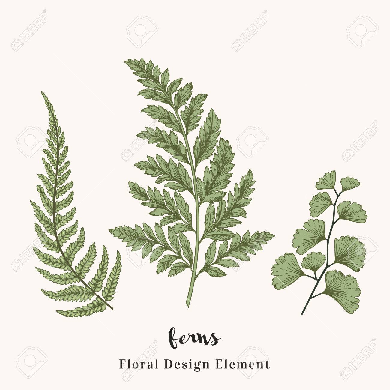 Set With Ferns Plants With Leaves Isolated On White Background