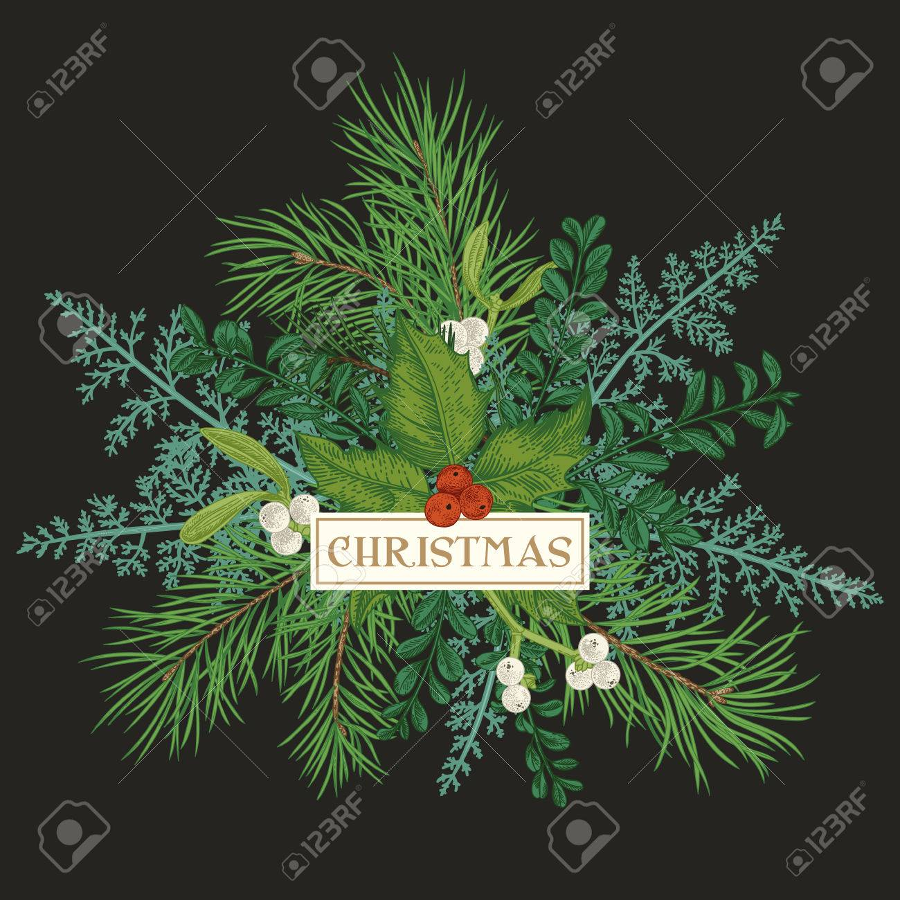 Greeting Card With Pine Branches Holly Berries And Leaves Fern